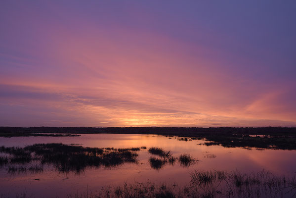 Feuchtwiese bei Sonnenaufgang