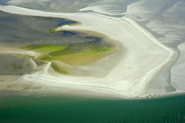 Sandbank mit Seehunden und Kegelrobben
