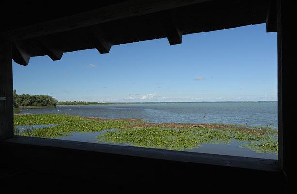 Blick aus der Beobachtungshütte auf die Hirschauer Bucht