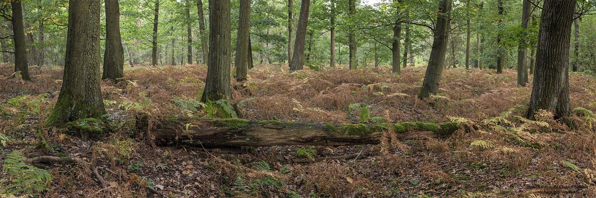 Eichenwald (D)