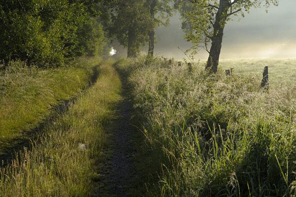 Feldweg und Morgennebel