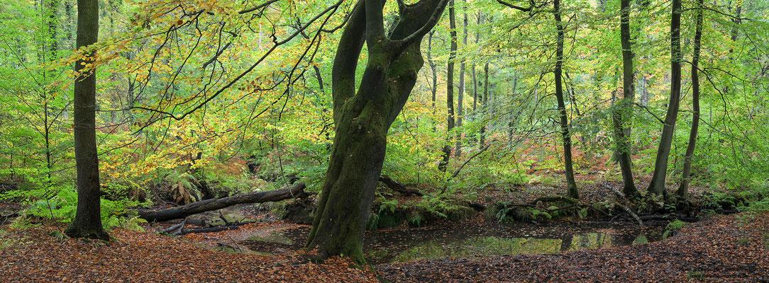 Bach im Herbst, Bottrop (D)
