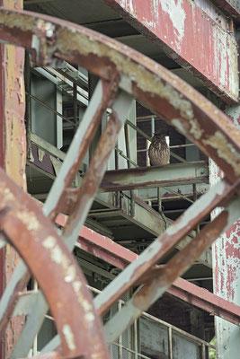 Uhu (Bubo bubo), hinter den Rädern vom Förderturm