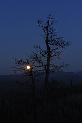 Mondaufgang am Lusen, NP Bayerischer Wald (D)