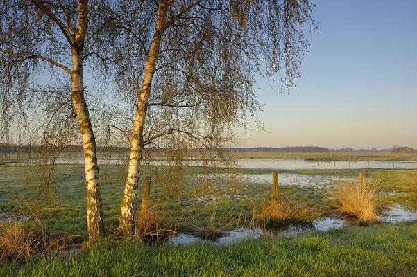 Feuchtwiese im Frühjahr