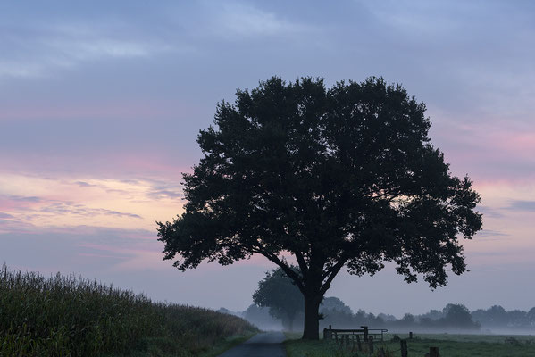 Morgens im Herbst