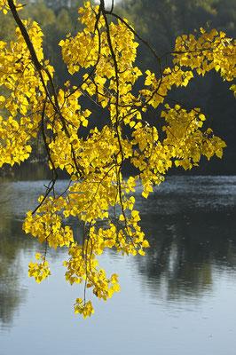 Herbstblätter (D)