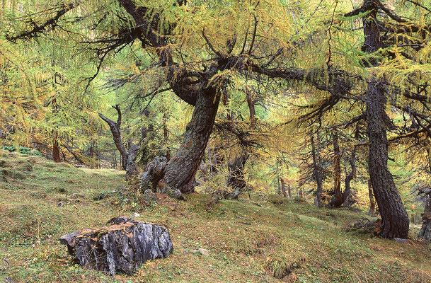 Lärchenwald (A)
