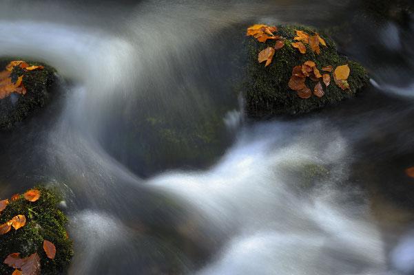 Kleine Ohe, NP Bayerischer Wald (D)