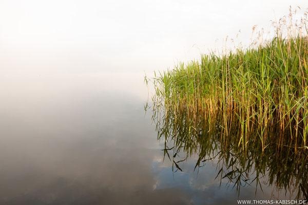Morgennebel - Mecklenburgische Seenplatte