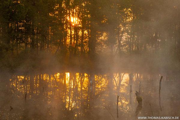 Sonnenaufgang im Pietzmoor - Lüneburger Heide