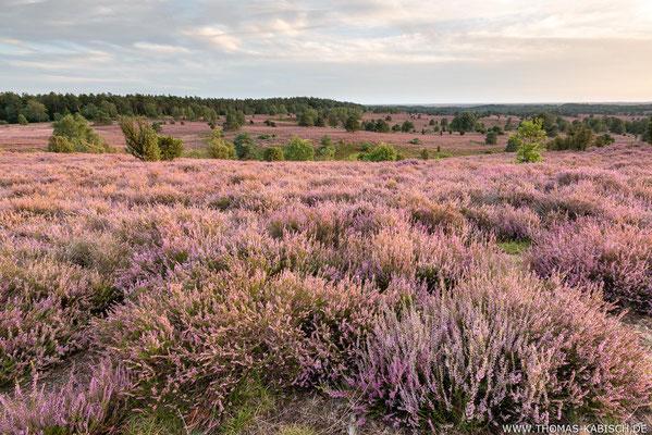 Wilseder Berg - Lüneburger Heide