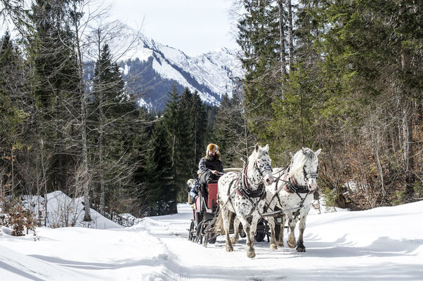 Pferdeschlittenfahrt durch verschneite Landschaften
