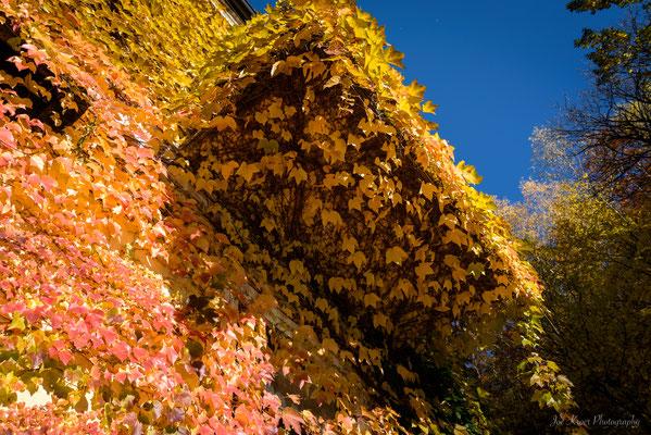 Orange in Autumn