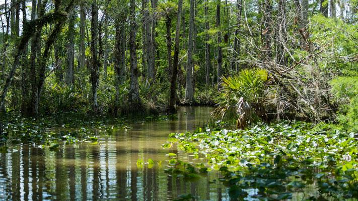 fauna & flora in FLorida (Everglades)