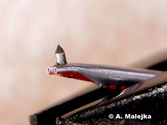 Abtastnadel nach der Reinigung (Nadel-Nachbau einer Dual DN 160E)