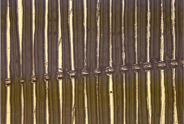 starker, tiefer Kratzer quer über die Platttenrillen. Verursacht mit großer Wahrscheinlichkeit Störgeräusche beim Abspielen!