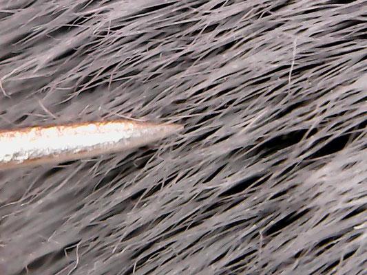 Stecknadelspitze an den Borsten. Die Pinselhaare sind dünner als die Stecknadelspitze!!!