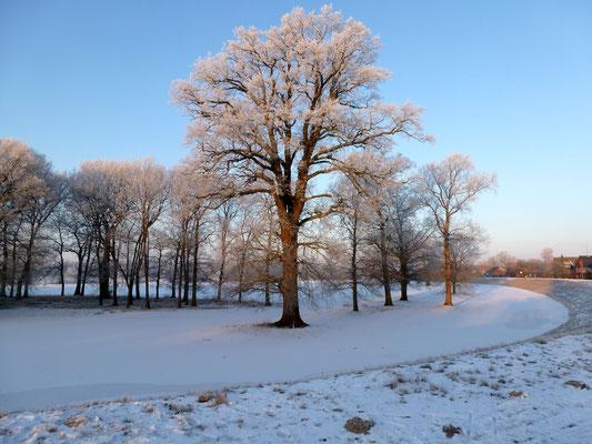 Winterlandschaft an der Elbe in Unbesandten