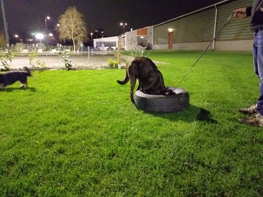 Hondenschool Rotterdam SHH Sociale huis hond