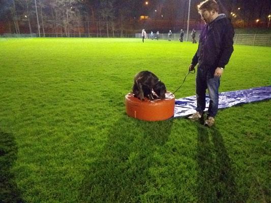 Hondenschool Rotterdam Puppycursus