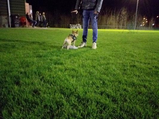 Hondenschool Rotterdam