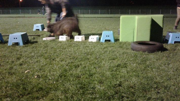 Fun4paws Hondenschool Rotterdam USV VOP