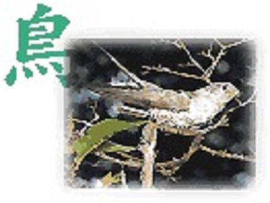 郡山市の鳥:カッコウ