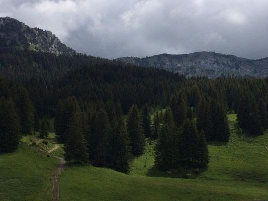 Bois des Lanches