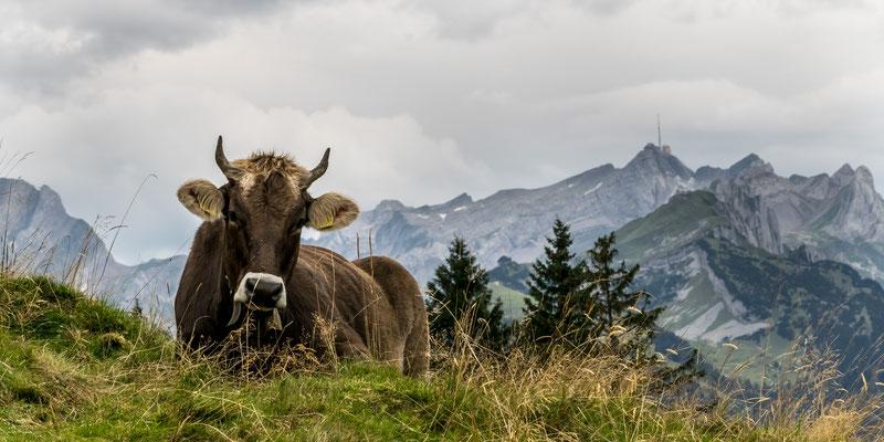 Säntis Alpstein Schweiz