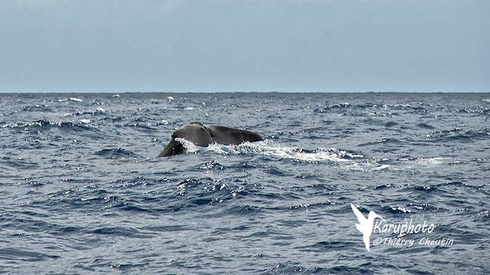 Baleine - Karuphoto