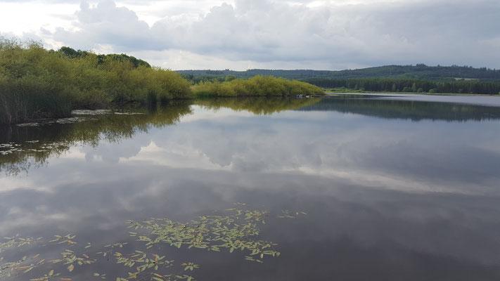 Das Naturschutzgebiet Jungferweiher