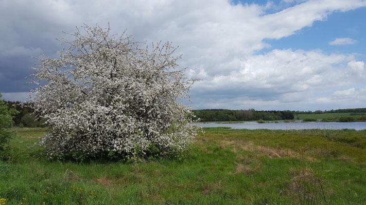 Der Jungferweiher im Frühling