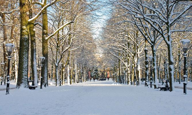The Hague Christmas Market - Copyright denhaag.com