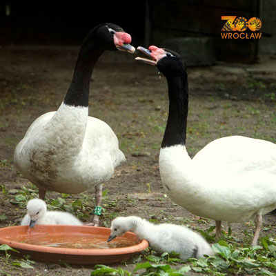 Zoo Wroclaw - Copyright Zoo.wroclaw.pl  - European Best Destinations