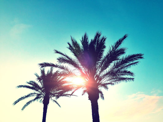 Ibiza - European Best Destinations - Palmtree in Ibiza Copyright vvvita