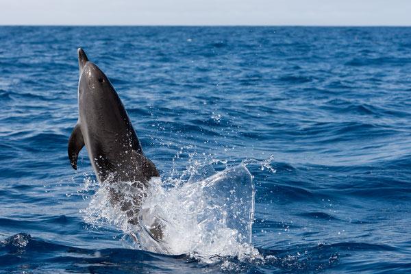 Tenerife - European Best Destinations - Tenerife - Canary Island - Dolphin - Copyright Markus Kaemmerer