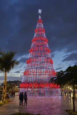 Christmas in Funchal, Madeira - Copyright Henrique S - Visit Madeira