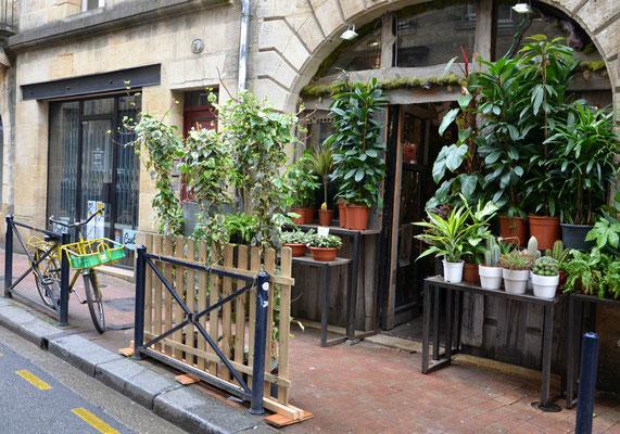 Bloom-Bordeaux