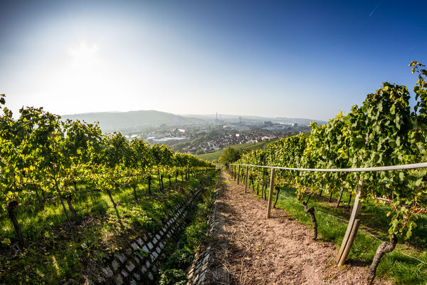 View down a vineyard with the City of Stuttgart in the background Copyright AMzPhoto
