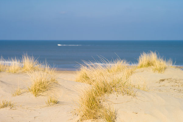 Sand Dunes, Kijkduin Beach, The Hague, The Netherlands by Lachouettephoto