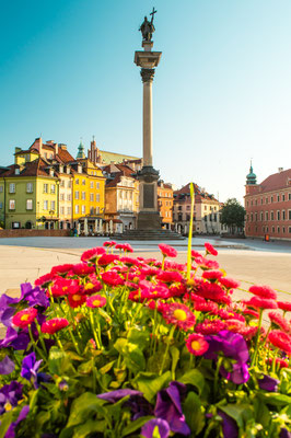 Sigismund's Column and flowers on the Castle Square in sunrise time in Warsaw, Poland Copyright Andrii Lutsyk