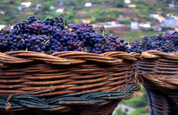 Winemaking in Madeira - Copyright paulrommer