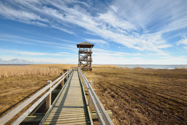 Wildlife observation tower in a swamp area next to lake in Liepaja, Latvia Copyright Aleksey Stemmer
