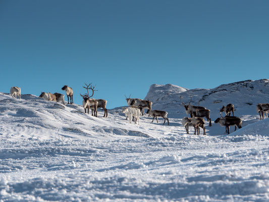 Are ski resort, Sweden - Johan Huczkowsky, SkiStar