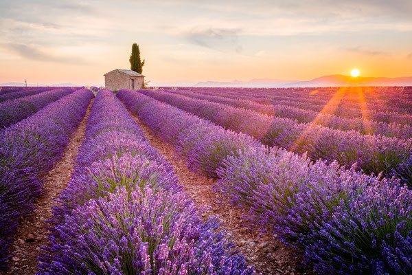 Provence, Lavender field at sunset, Valensole Plateau near Aix-en-Provence, France - Copyright ronnybas
