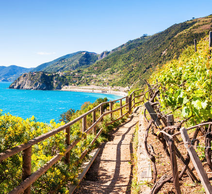 Cinque Terre - European Best Destinations - Vineyards of Cinque Terre - Copyright Olga Gavrilova