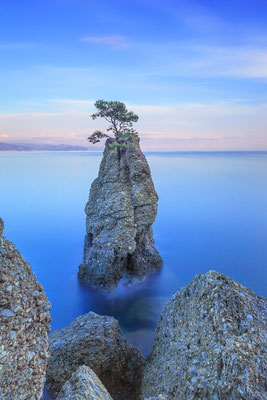 Portofino - European Best Destinations - Lonely pine tree rock in Portofino Copyright StevanZZ
