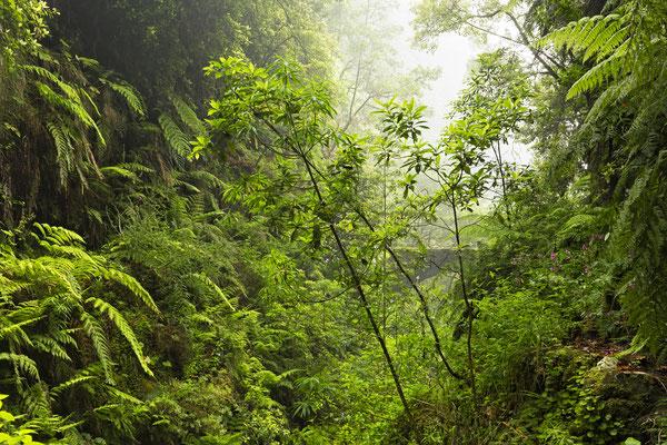 Caldeirao Verde, Madeira, Portugal