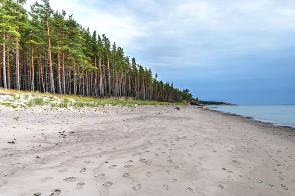 Abandoned beach of Liepaja, Latvia Copyright dinozzaver